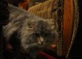 cat.21