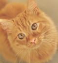 cat.15