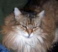 cat.37