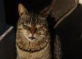 cat.38