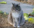 cat.39