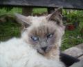 cat.41