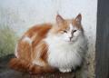 cat.4