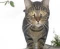 cat.26