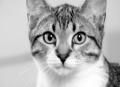 Top 5 Cat Symptoms