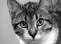 Increasing Your Cat's Metabolism