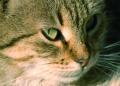 cat.23