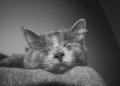 cat.34