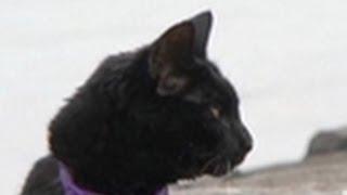 roadrunner jogging cat