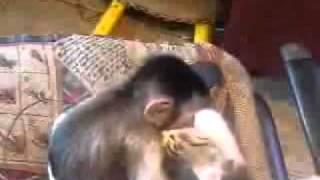 monkey kisses cat