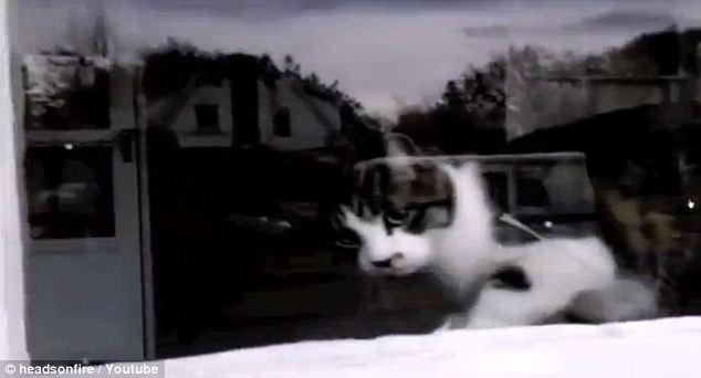 junk mail cat