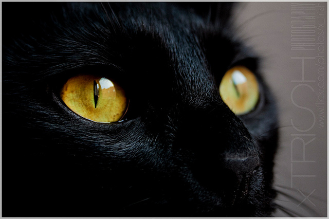 Conjunctivitis in cats