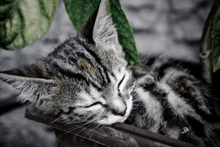 Cats' Sleeping Patterns