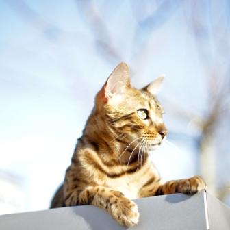 The Cat's Extraordinary Senses