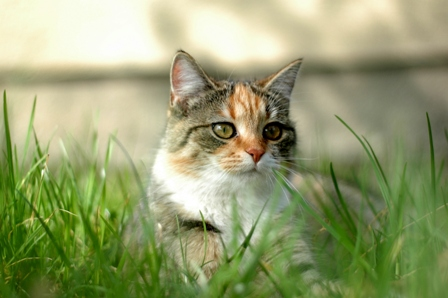 How to Decide on an Indoor or Outdoor Lifestyle of Your Cat