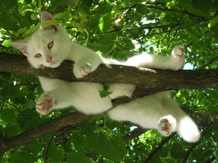 Why Do Cats Hide in High Places?