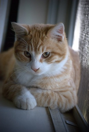 Signs and Symptoms of Cat's Arthritis