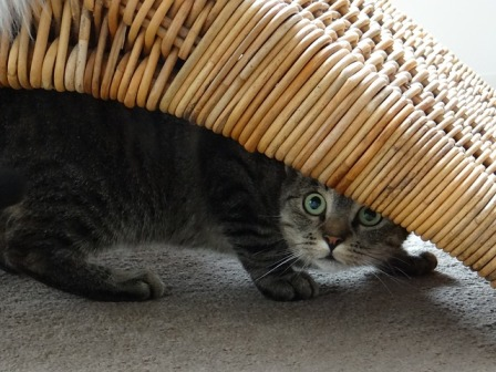 Why Do Cats Hide Under the Bed?