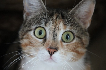 Do Cats React to Human Emotions?