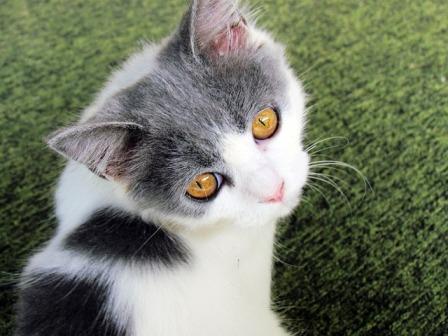 Do Cats Feel Empathy?