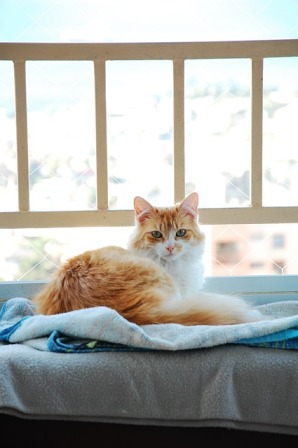How to Help a Cat with Arthritis