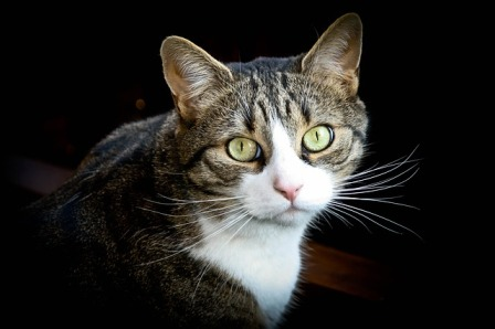 How Do Cats Predict Earthquakes?