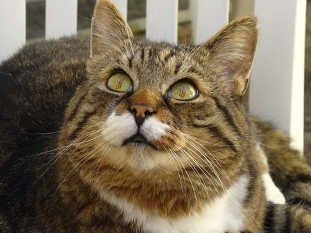 cat eye taillight