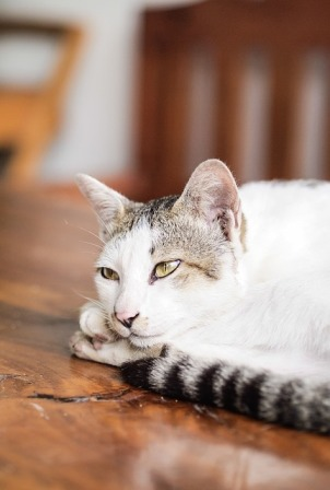 How to Discover Early Symptoms of Illness in Cats
