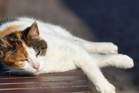 How to Prevent Heat Stroke in Cats