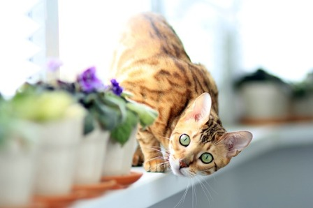 What Common Mistakes Do Cat Owners Usually Make?