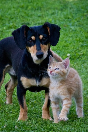Cat Lovers and Dog Lovers: Personalities and Differences