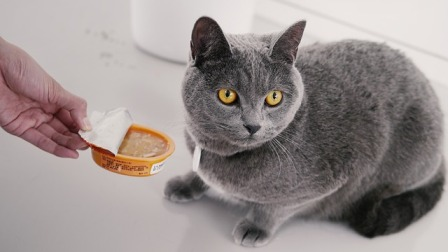 How to Prevent a Cat from Being a Finicky Eater
