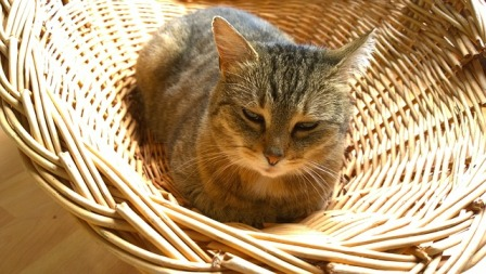 Home Care for Cats With Diabetes