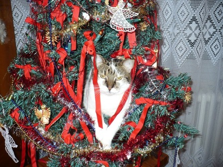 Cats and Christmas Tree