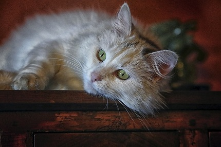 How to Recognize the Symptoms of Stress in Cats?