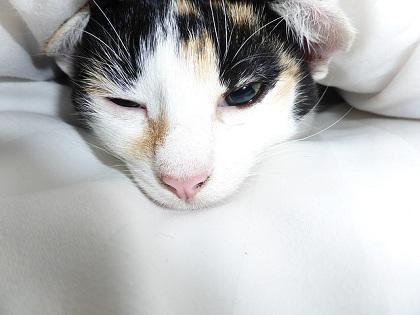 What to Do to Help Poisoned Cat