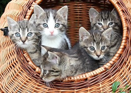 What to Do If Mother Cat Abandons Kittens?
