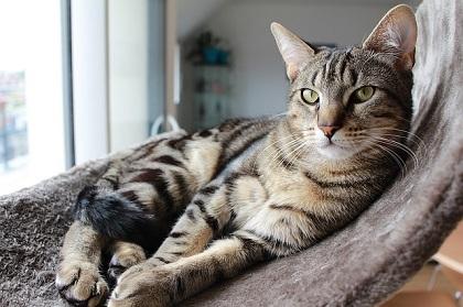 How to Turn Outdoor Cat into Indoor One?