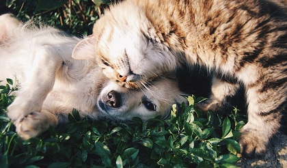 Who Has Better Sense of Smell – Cats or Dogs?