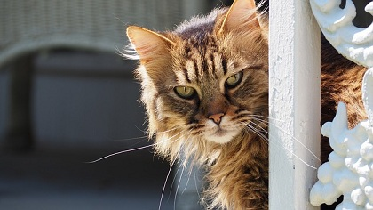 Common Cat Care Myths