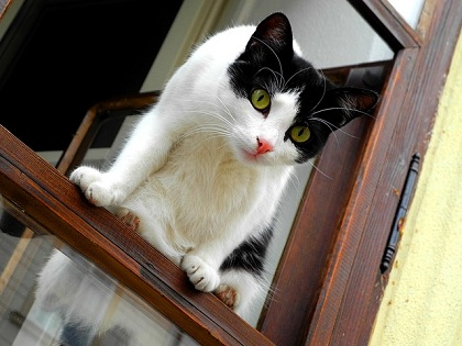 High-Rise Syndrome in Cats