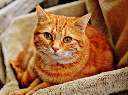 What Causes Stress in Cats?