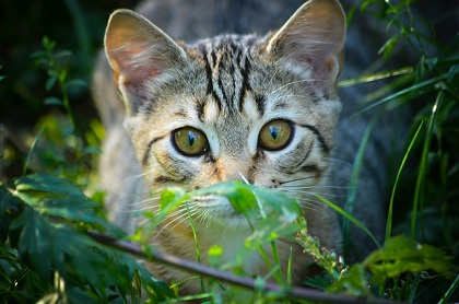 What To Do To Reduce Stress In Cats Cat Diabetes Amp Cat Care