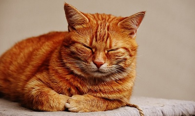 How Cat's Behavior Change as They Age