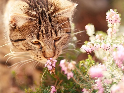 Cats and Homeopathy