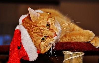 How to Keep Your Indoor Cat Happy?