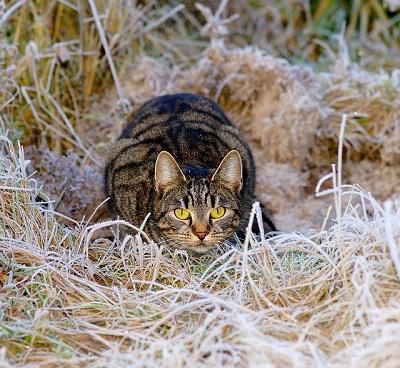 Cat Hunting Skills