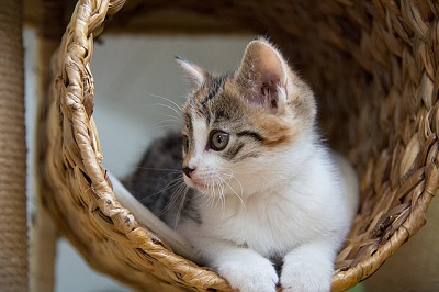 How to Stop a Cat from Chewing Cords?