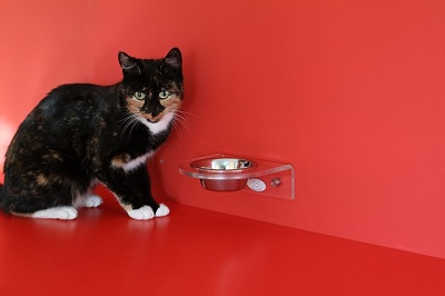 What Can Cats Eat If You Run out of Food?
