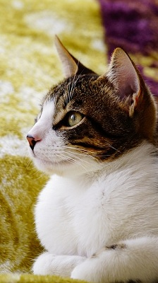 serious-cat-2119834_640